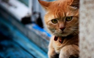Threatening to Harm Pets is Narcissistic Abuse