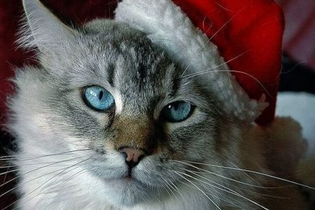 Holidays with Grumpy Cat