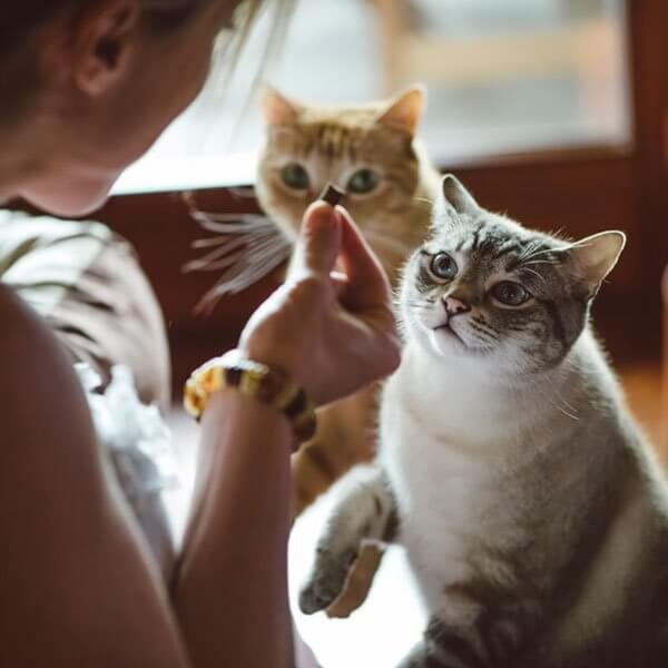 Cats competing for Treats